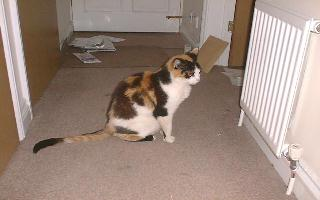 Polly, an elderly tortoiseshell and white cat. (Pictured here August 1999, towards the end of her life)